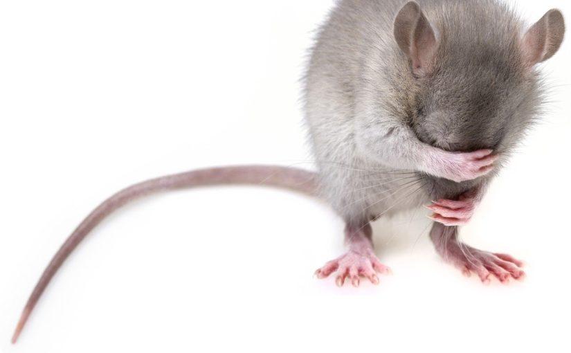Jak pozbyć się myszy z piwnicy?